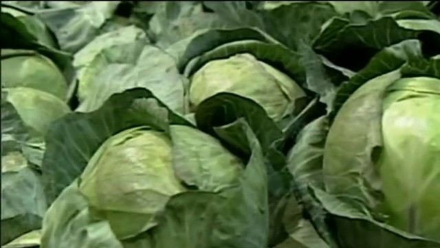 Check out these health benefits of cabbage