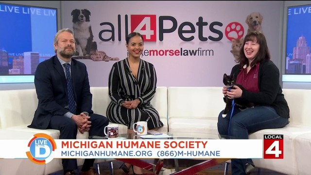 Find the purr-fect pet at the Michigan Humane Society's Bow Wow Brunch