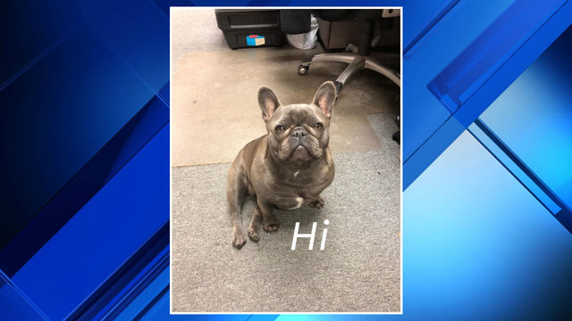 Dog stolen after being lured into parking lot in Shelby Township, officials say