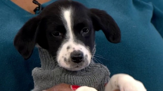 Pet of the Week: Mel
