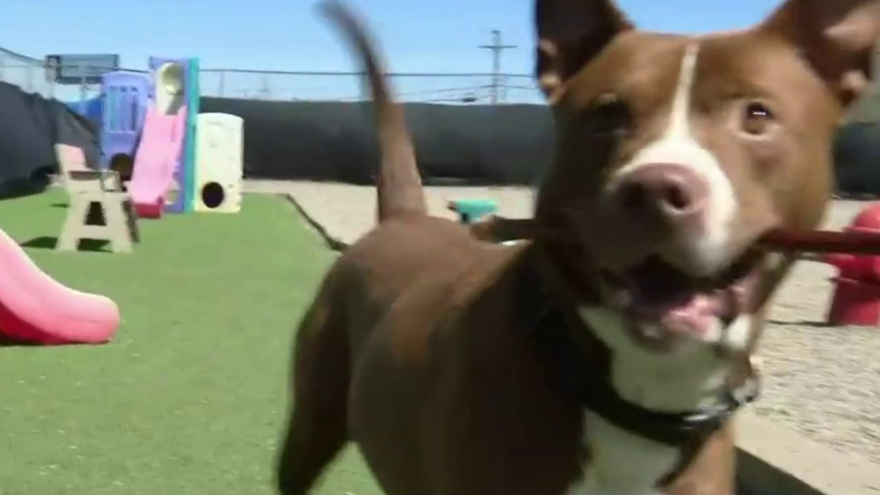 Madison Heights residents torn as pit bull mix faces death for allegedly killing chihuahua