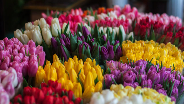 Enjoy magic, cooking demos, Flower Day at Ann Arbor Farmers Market in May