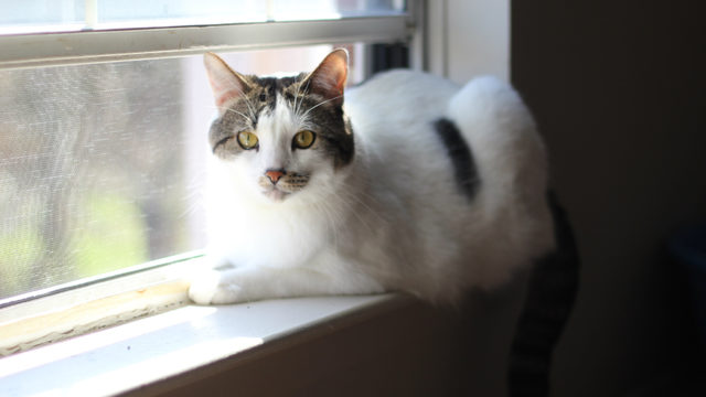 New York becomes first state to ban declawing of cats