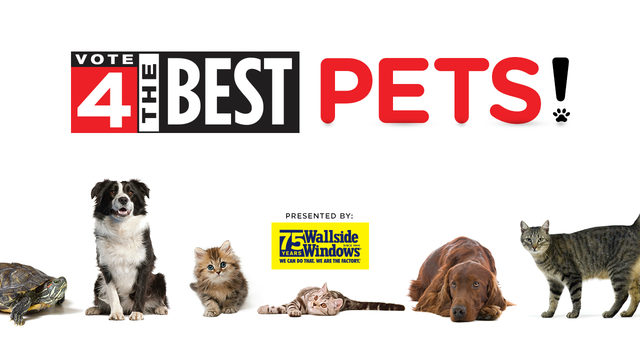 Winners in Local 4's Vote 4 The Best Pets revealed starting Wednesday
