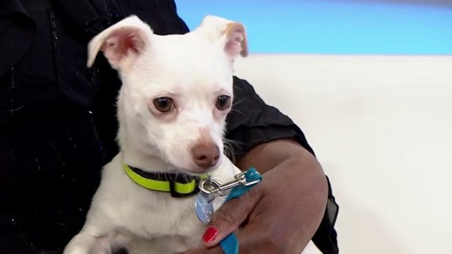 Pets of the Week: Meet Star and Stormee