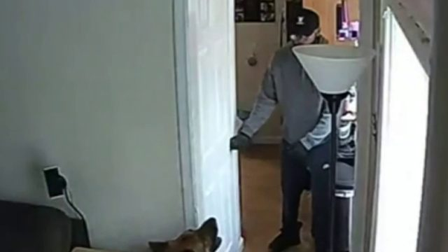 Man attacks dog with lamp, steals jewelry from Wayne home during break-in