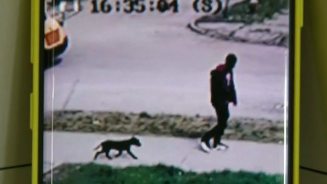 Video shows thief walking away with Detroit boy's beloved dog