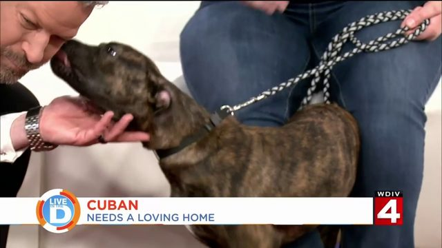 The Michigan Humane Society wants to help protect your pet
