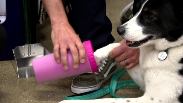 Premier Pet Supply: Tools to Keep those Dirty Paws Clean