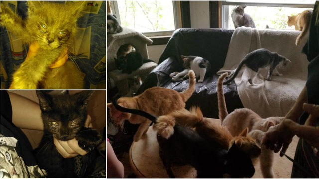 At least 60 cats rescued from home in Southwest Detroit