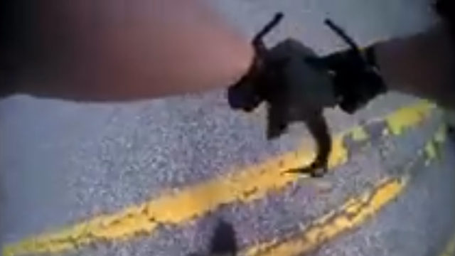 He likes turtles: Watch a Macomb County deputy rescue a turtle on body…