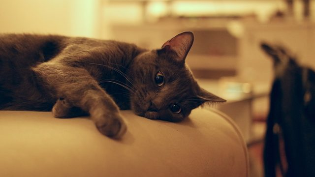 NY could become first state to ban cat declawing