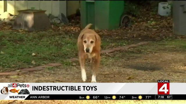 Unique toys for pets