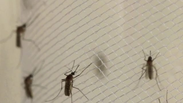 Aerial spraying continues in Michigan to combat mosquito-borne illness EEE