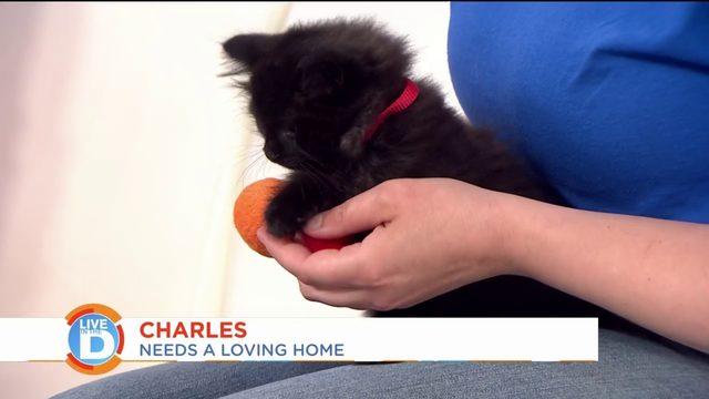 Michigan Humane Society helping veterans get pets