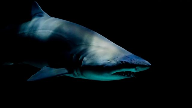 Shark bites child in third North Carolina attack this season