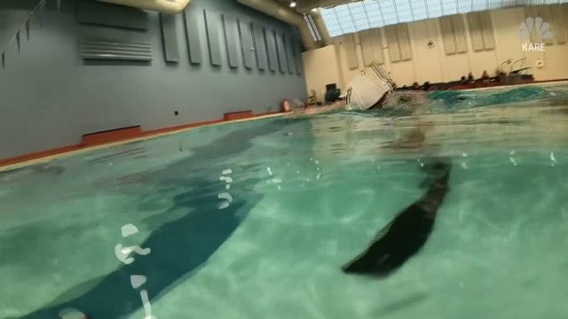 Ice is nice but the pool is cool: Underwater hockey is on the rise