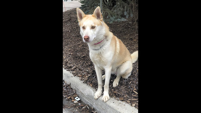 Dogs in Detroit looking for their fur-ever homes