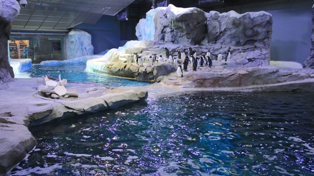 Detroit Zoo's penguin center to temporarily close from September to June…