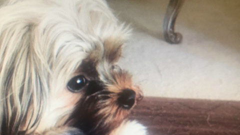 $1K reward offered for missing Farmington Hills dog, Hennessy
