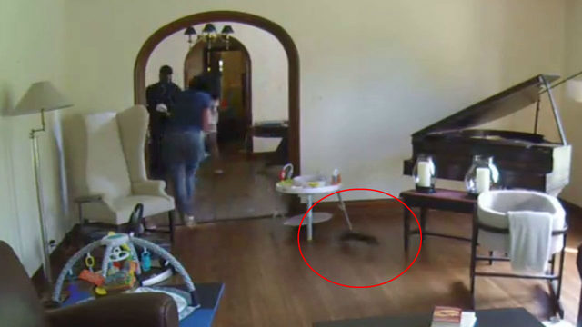 That's nuts! Check out video of a squirrel running around Kimberly Gill's home