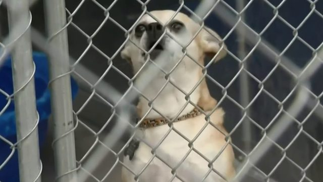 Almost Home Animal Shelter in Southfield faces uncertain future
