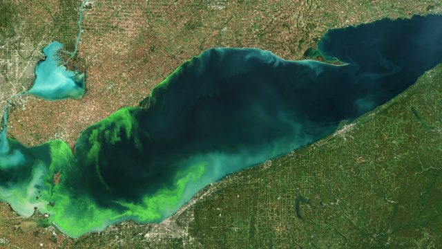 Large, harmful algal bloom predicted this summer for Western Lake Erie