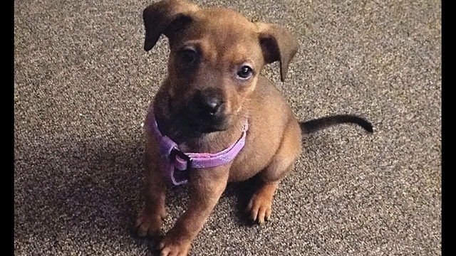 Puppies in Detroit looking for their fur-ever homes