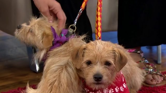 Pets of the week: Pop and Junior