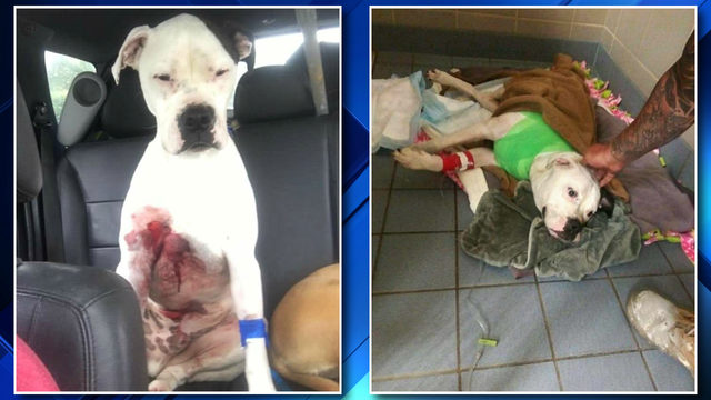 2 dogs shot while in fenced-in yard of Detroit home