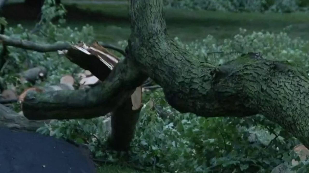 Intense storms uproot massive trees in Southfield