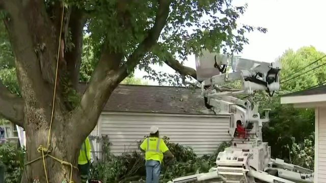 DTE Energy says fallen trees biggest cause of power outages