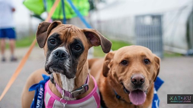 Honor canine caregivers at Bark For Life of Greater Ann Arbor on Aug. 24
