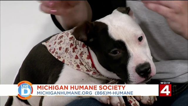 Your furry friend can be in the running for Michigan's most adorable pet
