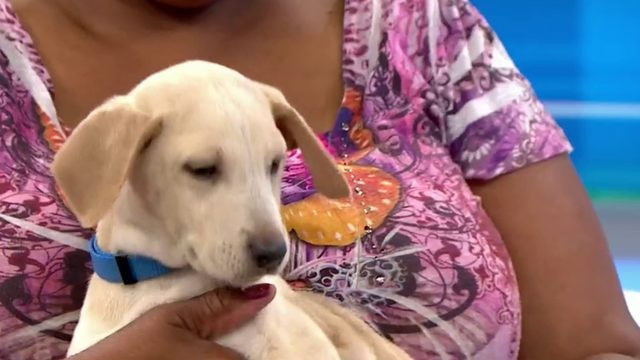 Pet of the Week: Dallas