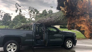 Police: Woman injured when tree falls on truck in Troy
