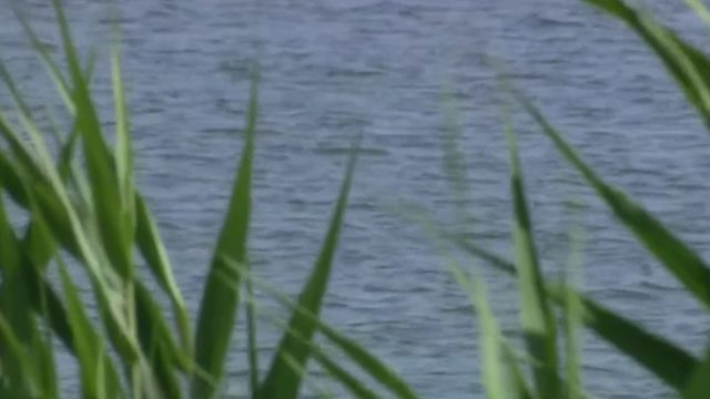 Another day, another alligator: Resident sees alligator in Belleville Lake