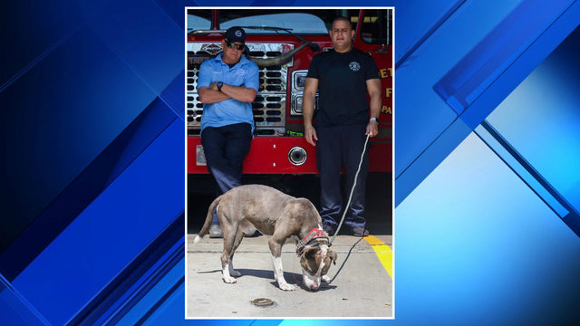 Detroit firefighters help rescue injured dog tied to wires, chain, belt