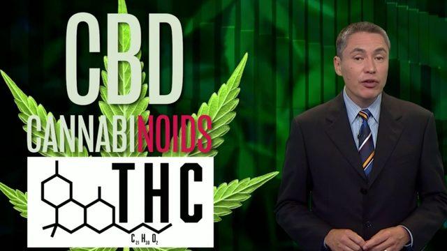 CBD 101: a lesson in cannabinoids