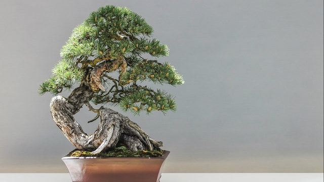 Marvel at the art of miniature trees at Ann Arbor Bonsai Society Show & Sale