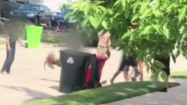 Large fight involving teens, 1 adult, 1 dog erupts in Roseville