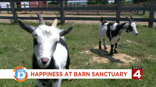 Farm animals find new life at The Barn Sanctuary in Chelsea