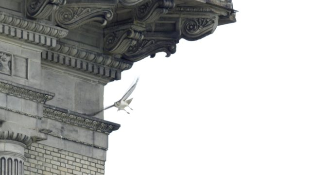 Meet the first new tenants of Michigan Central Station: Red-tailed hawks