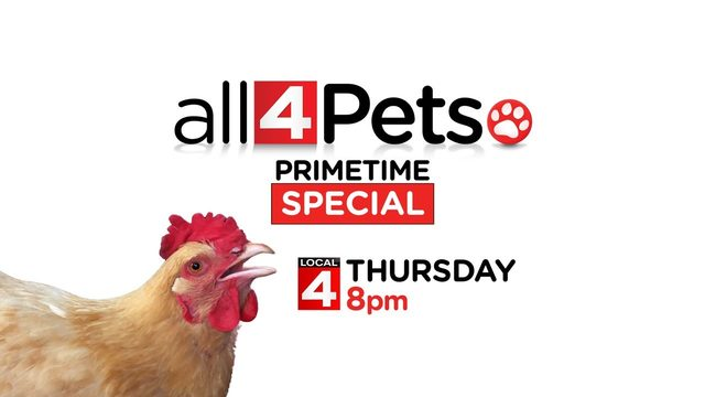 A police cat, butterflies, chicken TV star and more on 'All 4 Pets…