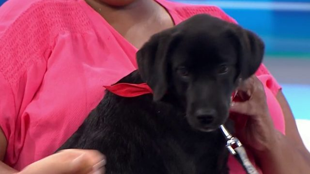 Pet of the Week: Snickers