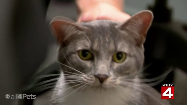 WATCH: A police cat, a chicken TV star and more on 'All 4 Pets Special'