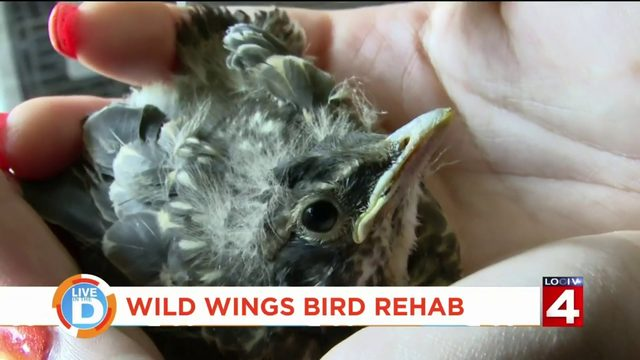 She's helping songbirds spread their wings in Hazel Park