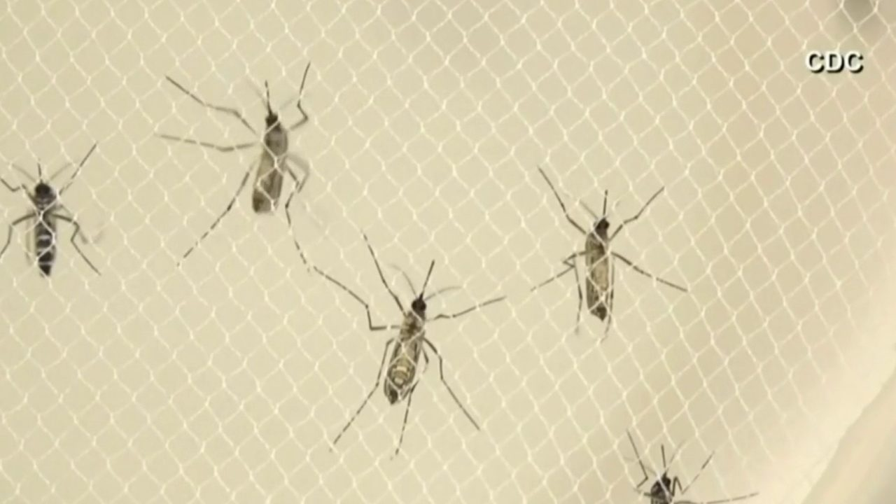 3 possible human cases of deadly mosquito virus EEE being