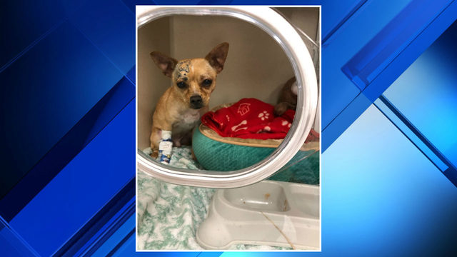 Animal rescue officials: Dog of Waterford Township fire victim needs help