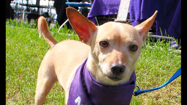 These Detroit-based canines are up for adoption and in need of a good home
